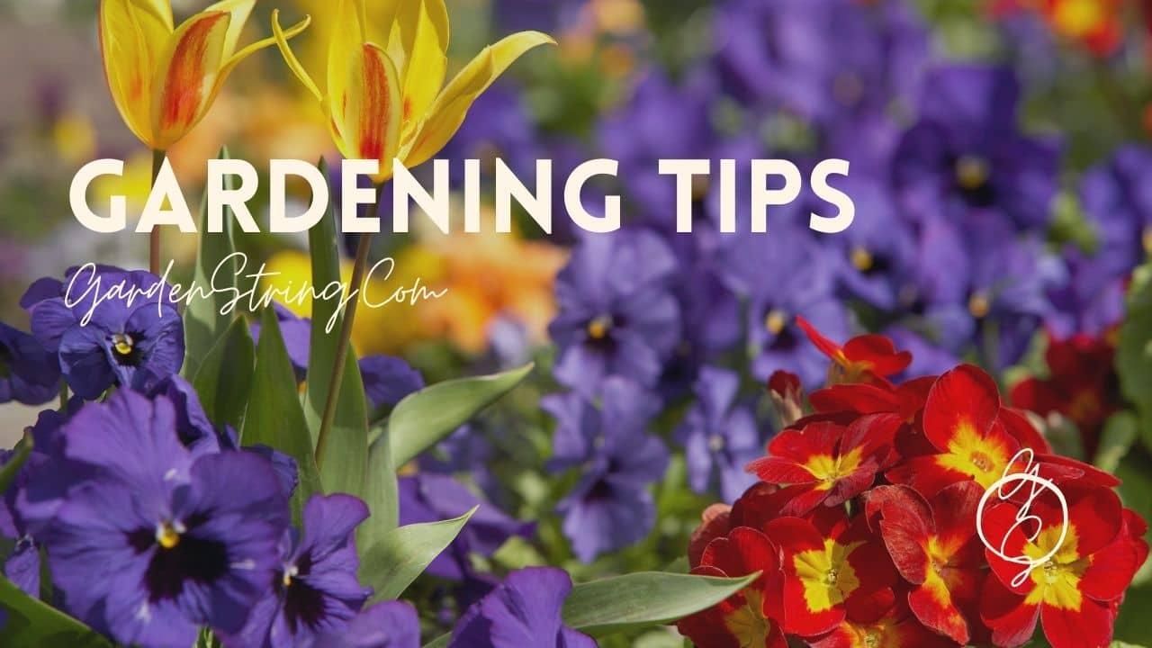 Beginners Tips for garden