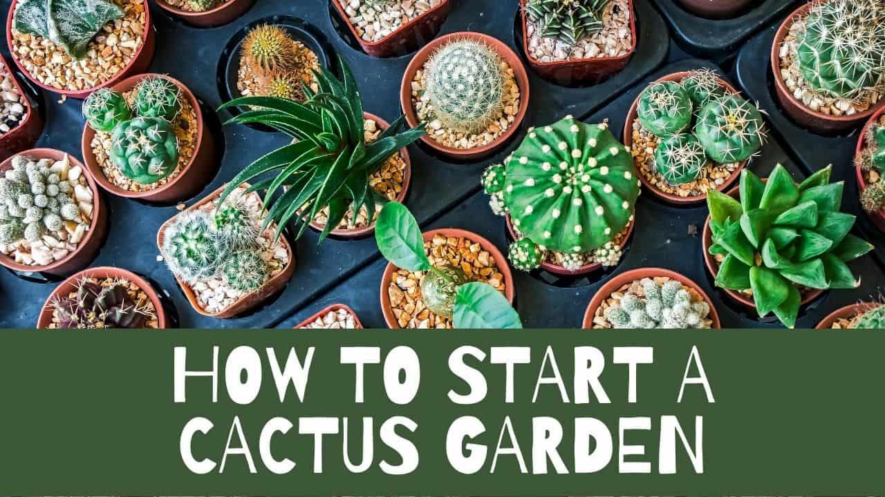 How To Start A Cactus Garden