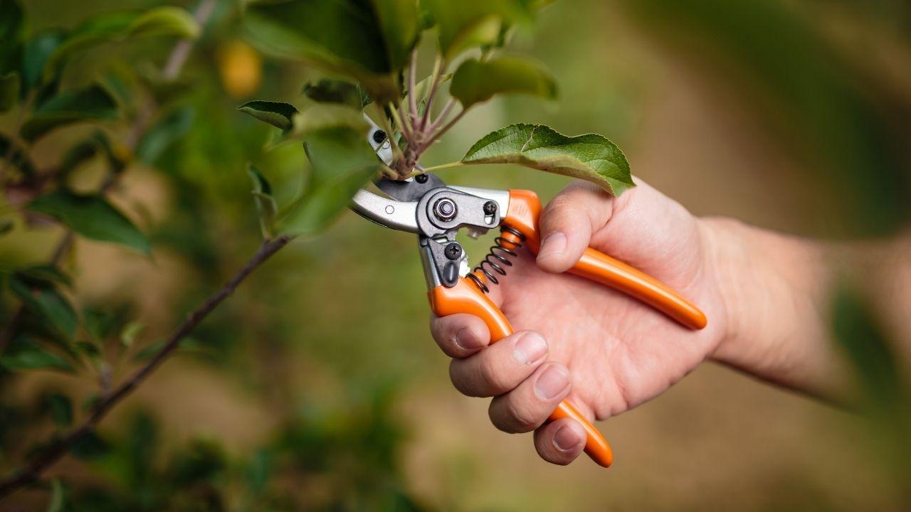 Leaf Pruning