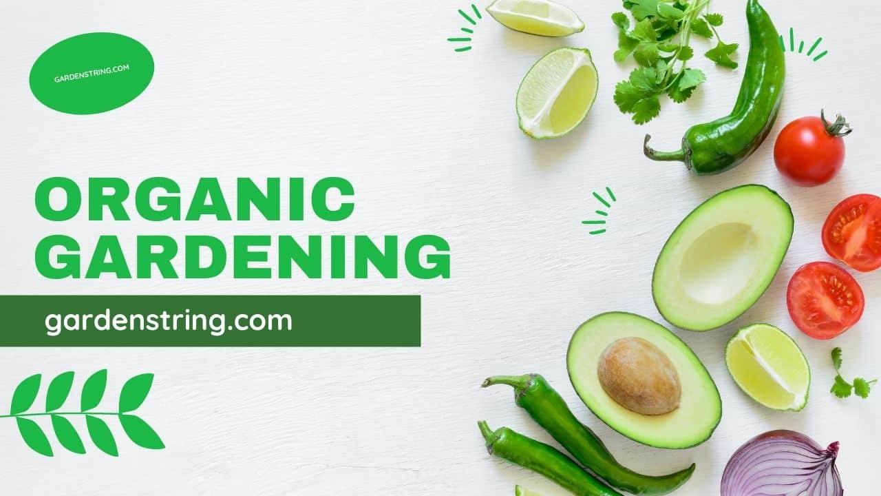 Why Organic Gardening