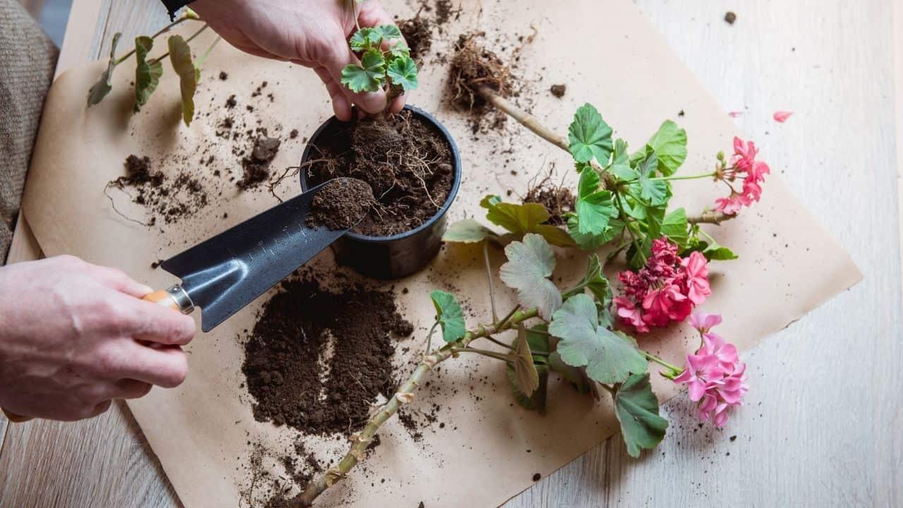flower pot transplant