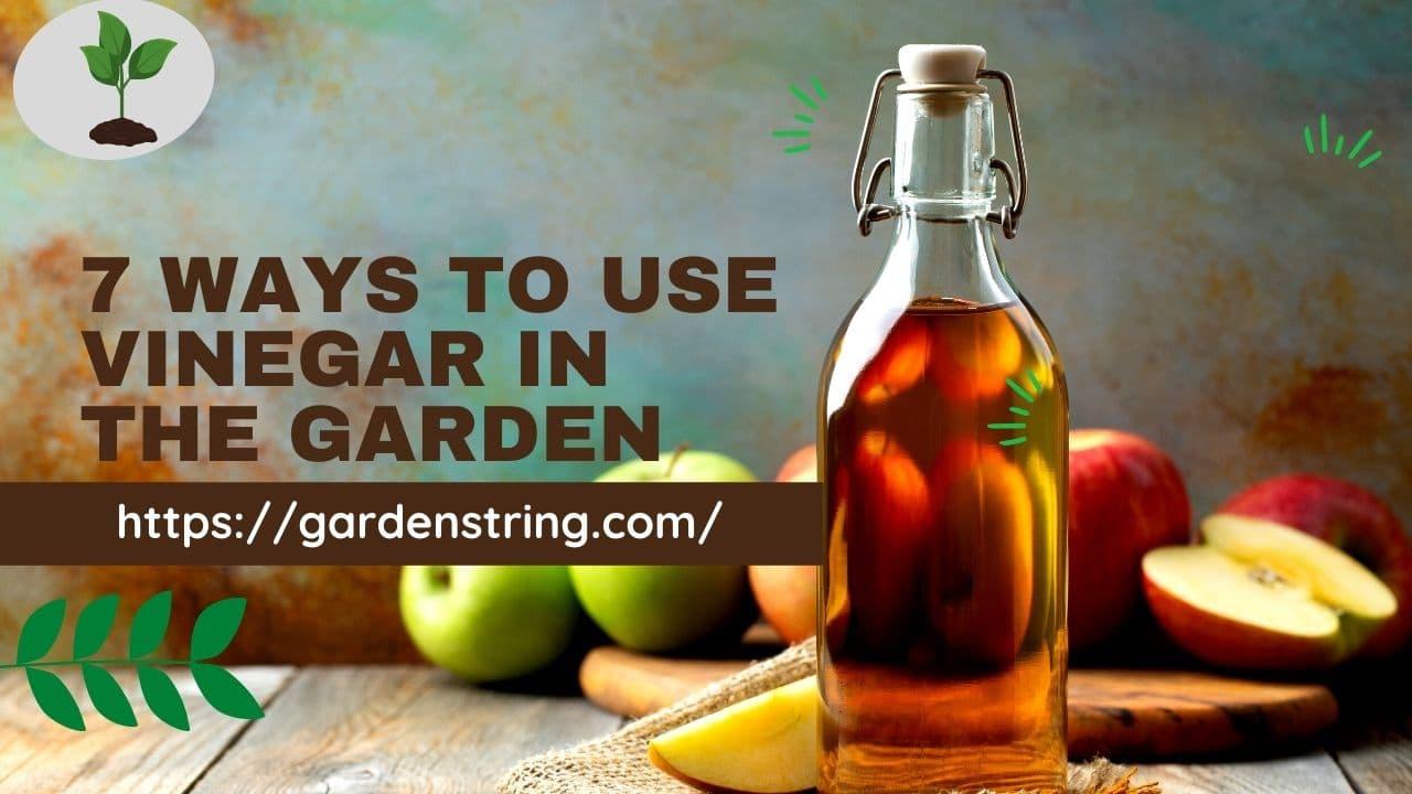 7 Ways To Use Vinegar In The Garden