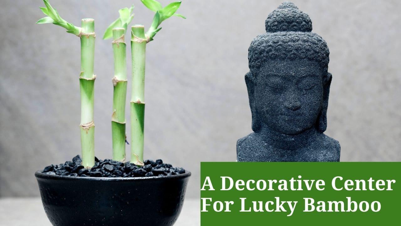 A Decorative Center For Lucky Bamboo