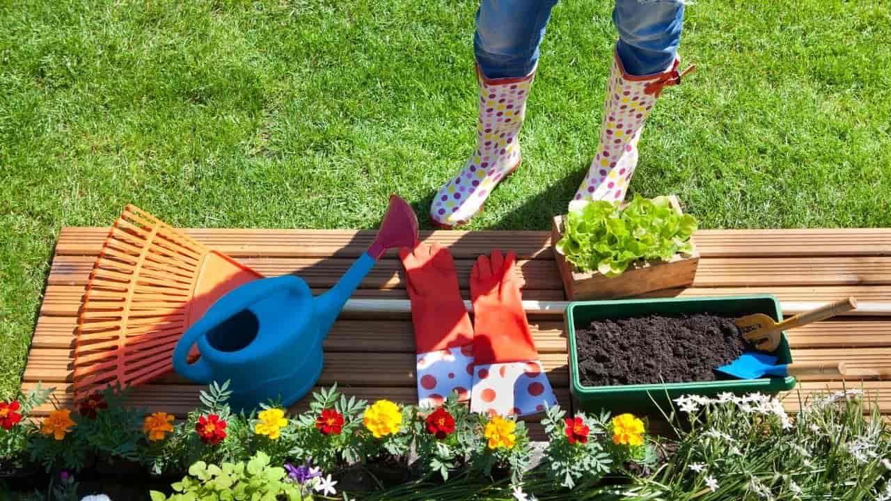 Beginner Gardening Mistakes (2)