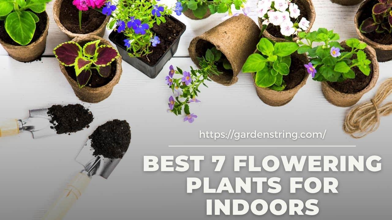 Best 7 Flowering Plants for Indoors