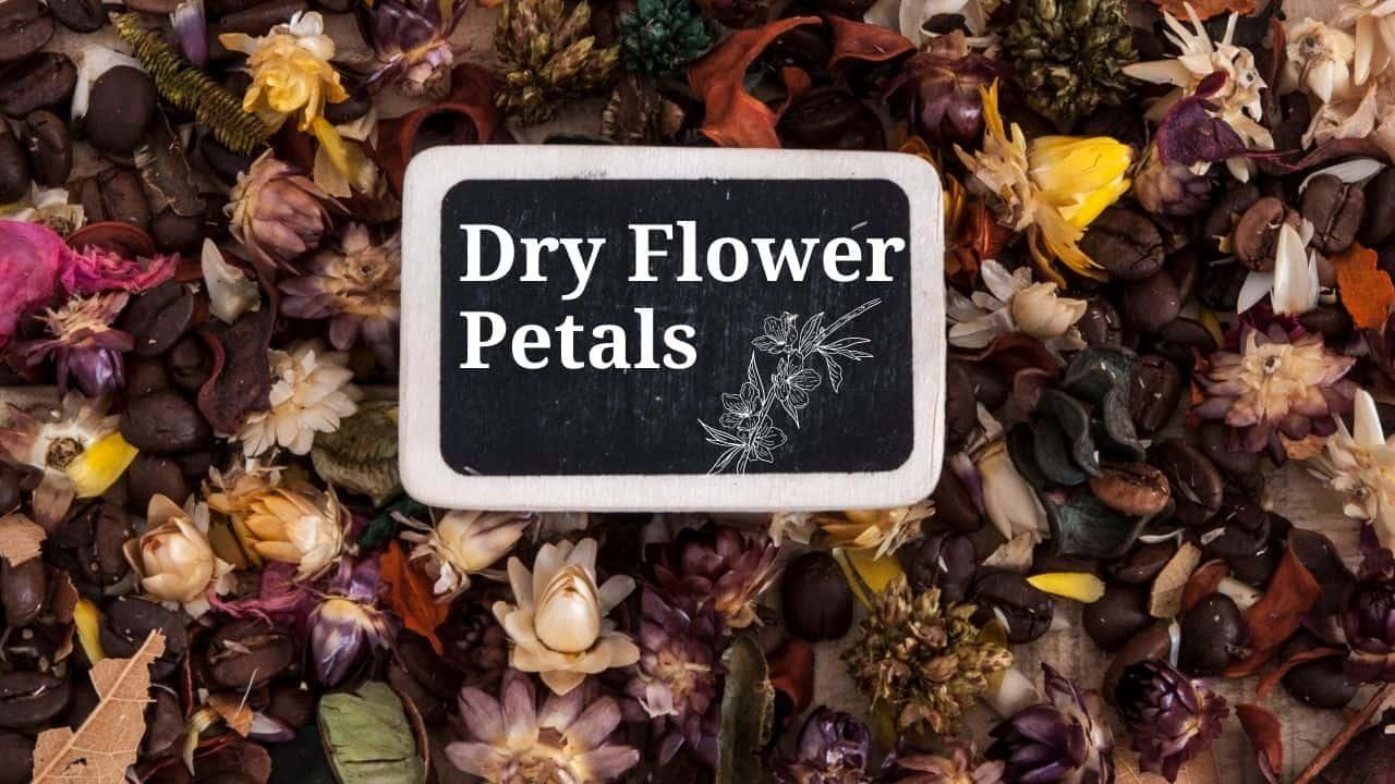 Dry Flower Petals