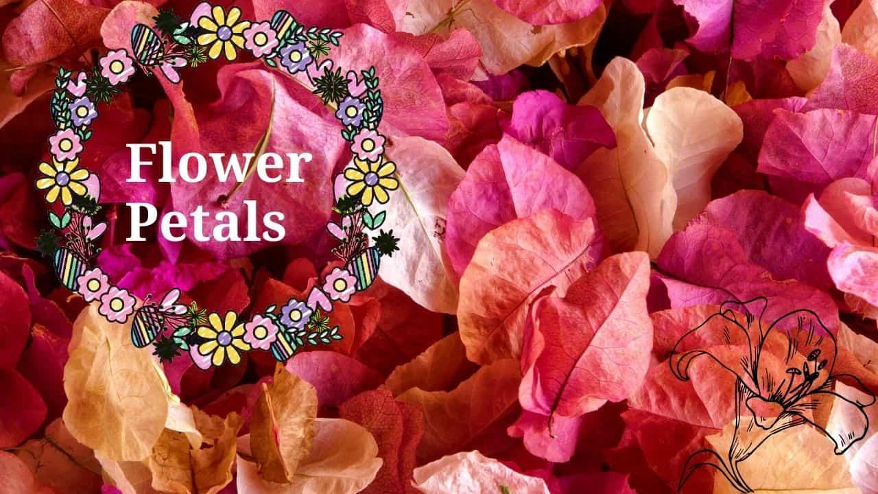 Flower Petalssss