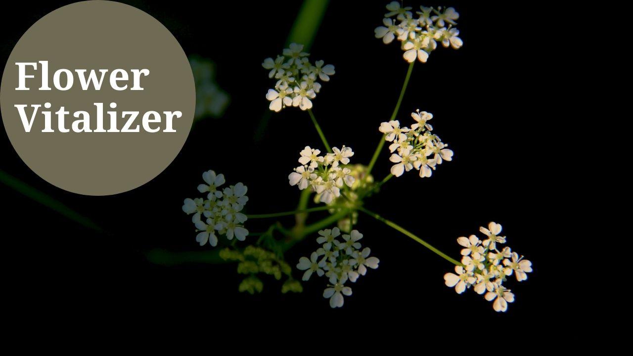 Flower Vitalizer