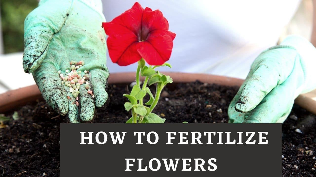 How To Fertilize Flowers