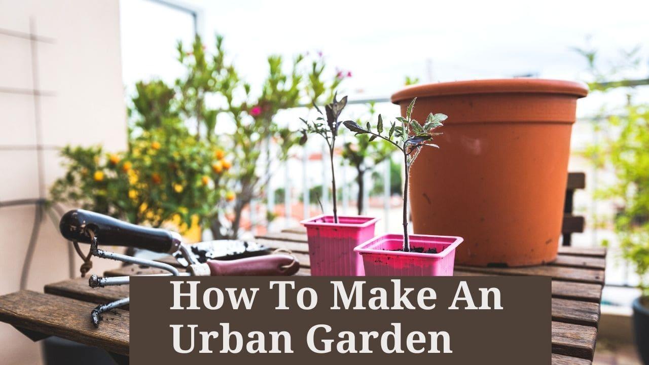 How To Make An Urban Garden (1)