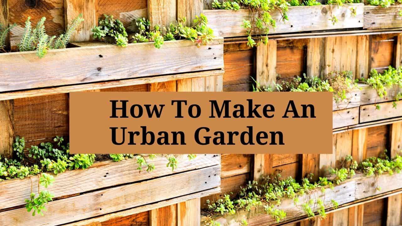 How To Make An Urban Garden