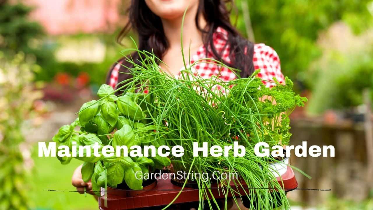 Maintenance Herb Garden