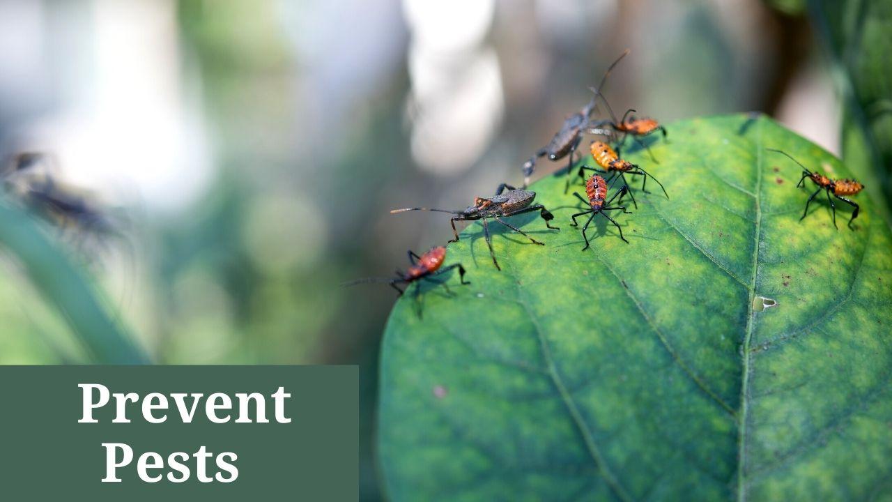 Prevent Pests