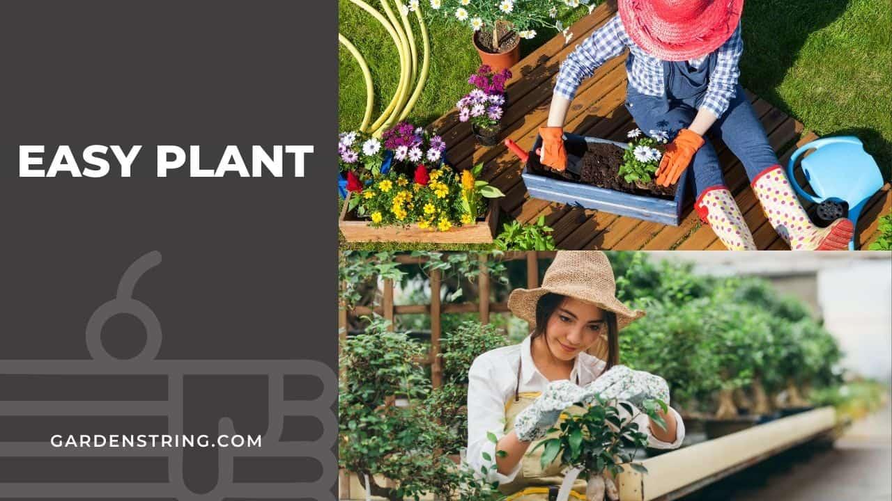 easy plant