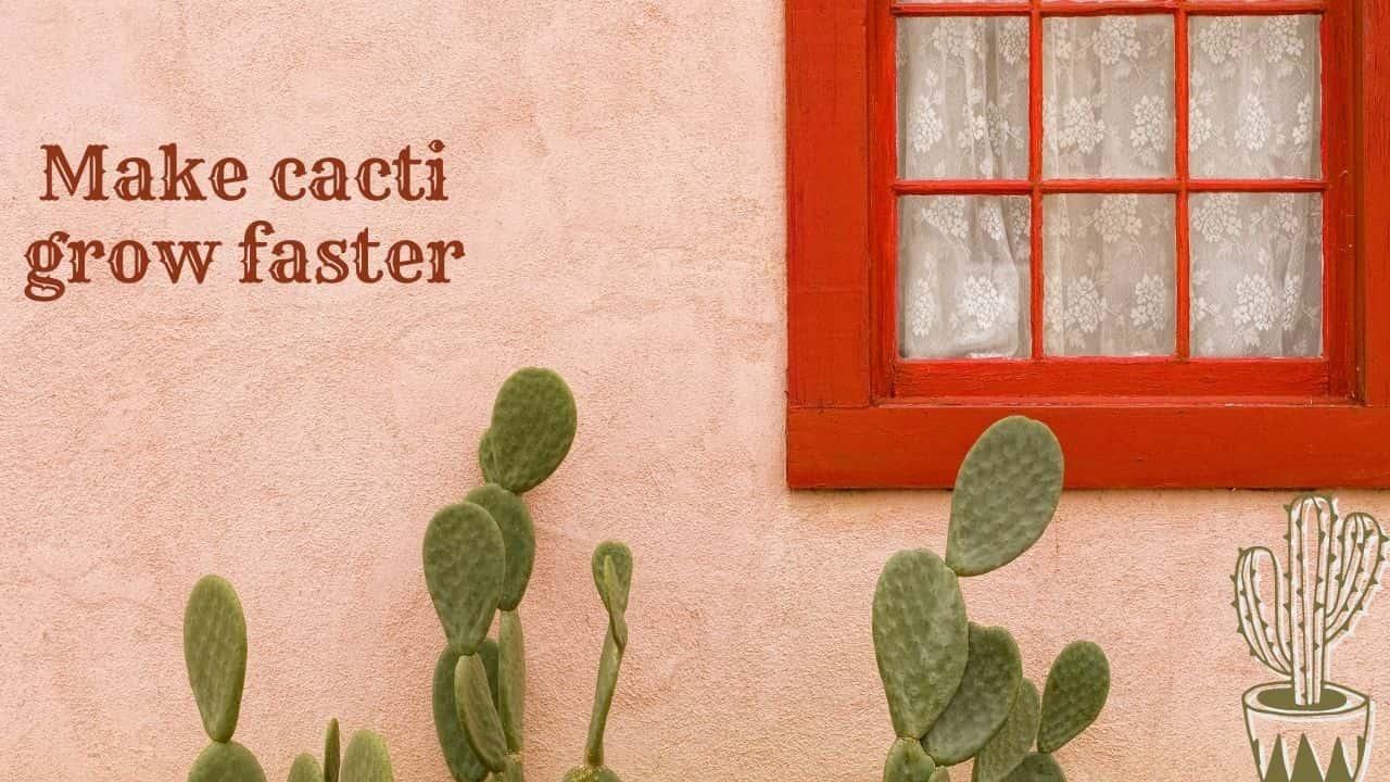 make cacti grow faster