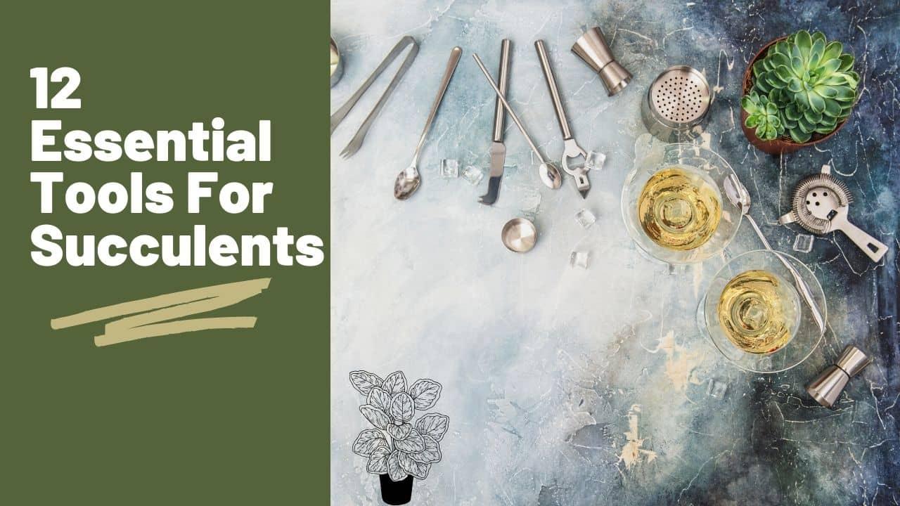 12 Essential Tools For Succulents